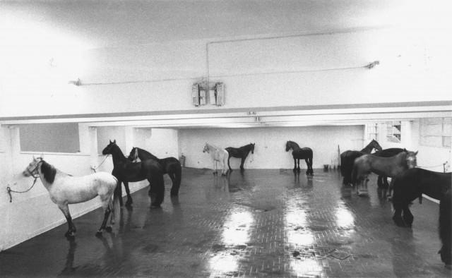 Jannis Kounellis, Senza titolo, 1969